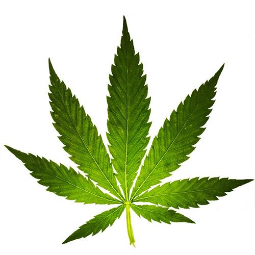 Legalizare marijuana Romania